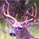 Deer Calls & Sounds app icon